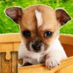 Dogs Jigsaw Puzzles Game – For Kids Adults 25.0 MOD Unlimted Money