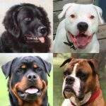 Dogs Quiz – Guess Popular Dog Breeds in the Photos 3.1.0 MOD Unlimted Money