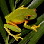 Frogs Jigsaw Puzzles MOD Unlimted Money